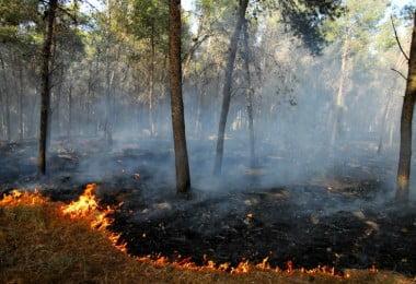 """ANTRAM diz-se """"solidária"""" com as empresas afetadas pelos incêndios"""