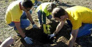 Voluntários da DHL plantam 2500 árvores autóctones
