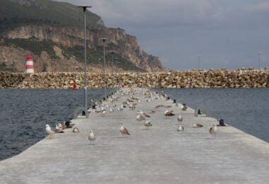 O Porto de Sesimbra inaugurou uma nova Ponte-Cais, a número 4. A APSS revela é a concretização do Plano de Ordenamento do Porto de Sesimbra.