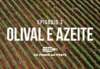 Práticas como a mitigação das alterações climáticas na produção de azeite estão em destaque no terceiro episódio do 'Prado ao Prato'.